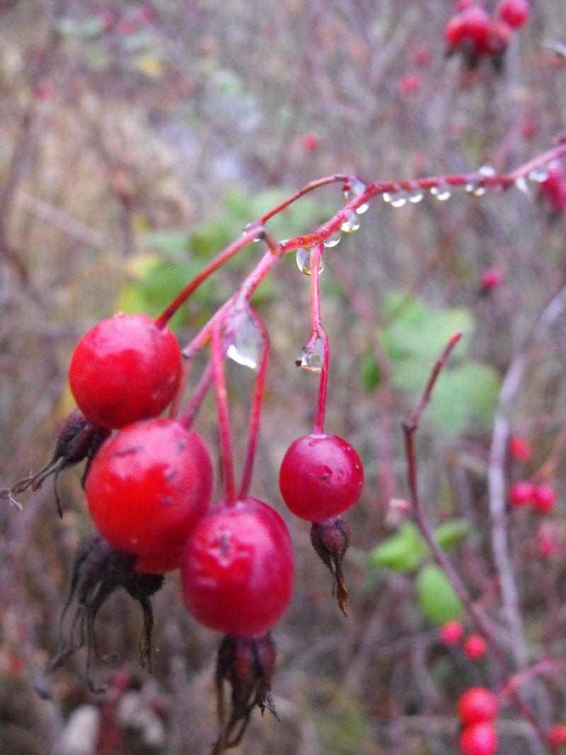Dew berries