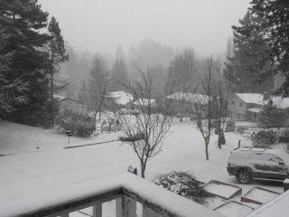 Snowday sunday