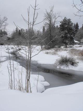 Snow 1221 091