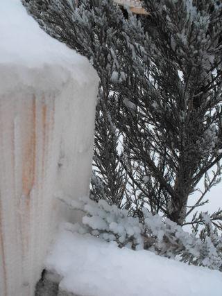 Snowice1 (2)