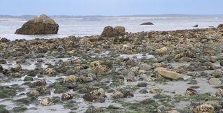 North beach1