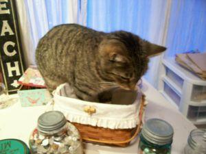 Funny_cat_2