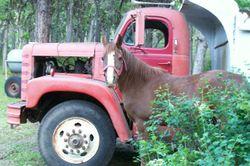Horsetruck
