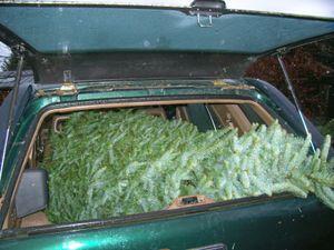 Tree_in_truck
