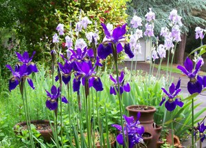 Front_garden1