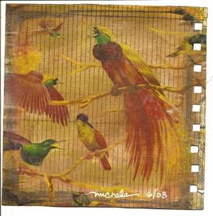 Bird_round_robin_6