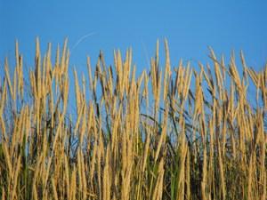 Blue_sky_and_grass
