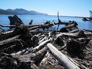 Driftwood_beach