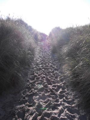Horse_trail