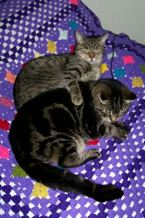 Cozy_kittens