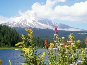 Mt_hood_view_with_flowers
